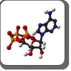 ATP-SMALL